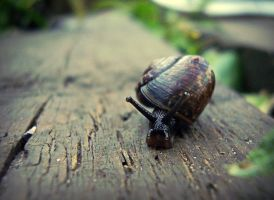 The Snail by 666GirL666