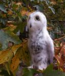 Needle Felted Snowy Owl by FeatheredFauna