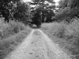 Country Lane 1 High, B+W by angelwillz