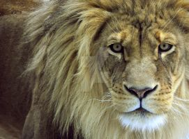African King by HecklingHyena