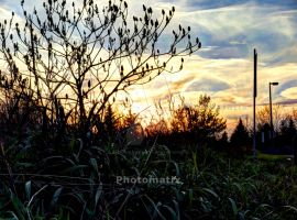 HDR - Bush by xXxHeatherAnnxXx