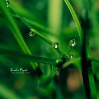 Nature after rain by xTive