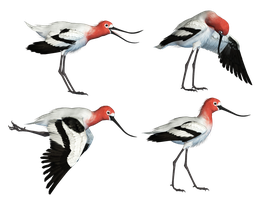 Wading Bird 02 PNG Stock by Roy3D