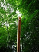 bamboo 1 by Saphiel89