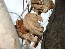 Deadleaf by AgentIrons