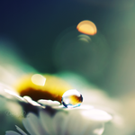 droplet... by onixa