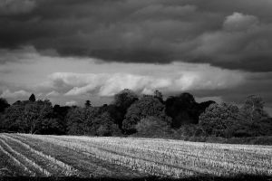 Corn gone by swandundee