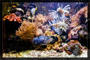 Stonefisch and fire-fish at the reef-tank by deaconfrost78