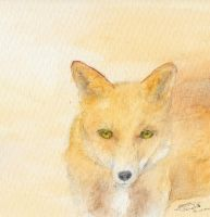 green eyed fox by Mosouito