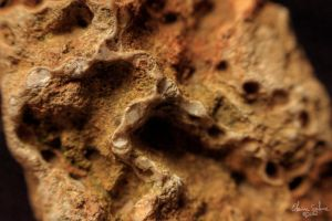 Chain Coral Fossil - Halysite by ElaineSelene