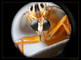 Vignetting the Robber by mantispid