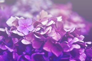 Dream of flowers by Musterkatze