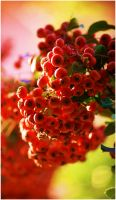 red 1 by wildtea