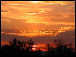 Sonoran Oranges Setting Sun by RooCat