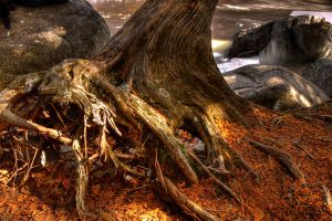 HDR Spring Stump 2 by Nebey