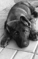 My PUPPY by TINNYo