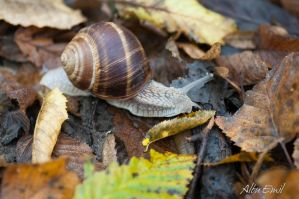 slow as a snail by albuemil