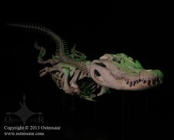 Swimming 9-Foot Alligator Skeleton by ToddGreen