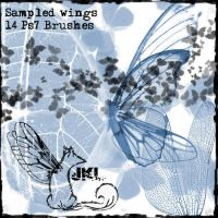 Sampled wings by jackle-ie