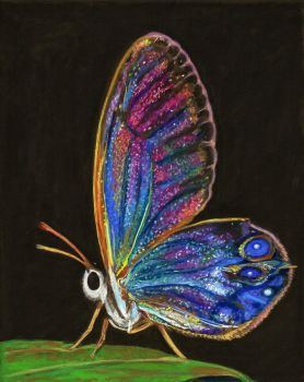 Translucent Butterfly. Soft pastel on sandpaper. by LuthienneTinuvielle