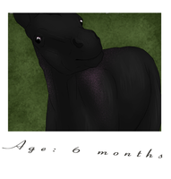 2 - Six Months by alexpeanut