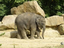 Baby Elefant by Lokipan