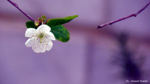 Take my hand Blossom by sharahi