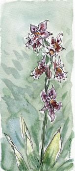 Orchids by angelac