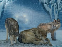 Wolves Seeking Shelter by JaneEden