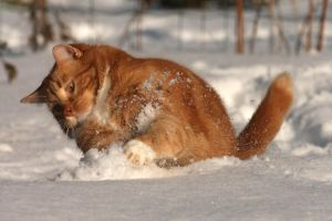 The ginger snowplow by BlastOButter