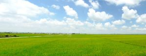 over the green field by tungkan