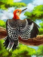 Woodpecker by r-20