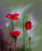 poppies by maxima-for