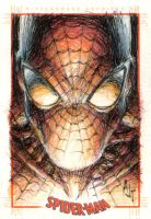 spidey head shot by AnthonyTAN7775