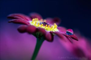 Together by dini25