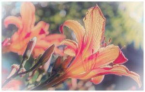 Flowers2013 by tina1138