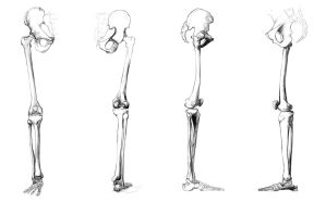 Anatomy Study - leg bones by Call0ps