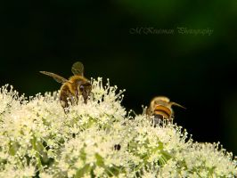 Two little bees by Yoh-Boo