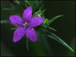 flower by RichardRobert