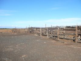 Paddock Corral Thingamabob 4 by Confussed-Stock
