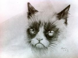 tard the grumpy cat by agentcoleslaw