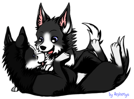 Border collie couple by Okami-Heart