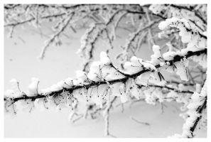 Snow Detail by anisia-gypsy