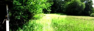Panorama of Aunt Ethel's Back Yard by superkitten1990
