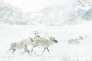 Reindeer Chase by MustLoveTrees