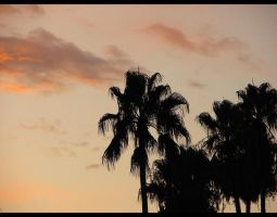 Palm Trees II by ngm23