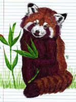 Red Panda Doodle by HonestAnxiety