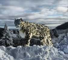 Snow Leopard by Kerri--Jo
