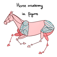 Horse anatomy in figures by konikfryzyjski