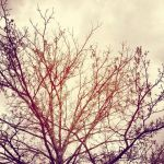 I Love Bare Trees by shelbyysmackdown